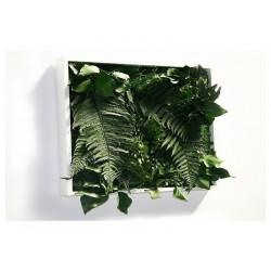 La tabla de la planta estabiliza matigreen 60 x 60 cm