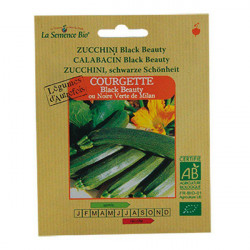 Graines bio Courgette longue Black Beauty - La Semence Bio