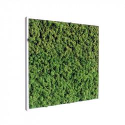 Tableau végétal stabilisé Kandinature 60 x 60 cm