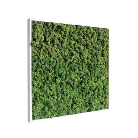 Tableau vegetal stabilise kandinature 60x60 cm