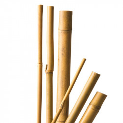 10 Tuteurs en bambou naturel - 60 cm / Ø 6-8 mm - Nature