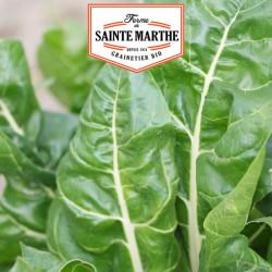 Poirée Verte à Carde Blanche 2 - 100 graines - La ferme Sainte Marthe