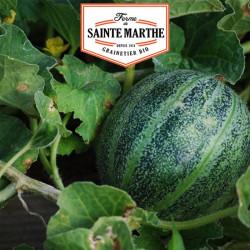 Melón, Piña de América a la carne roja 15 semillas - La ferme de Sainte Marthe