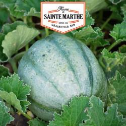 Melon ancien Vieille France 15 graines - La ferme Sainte Marthe