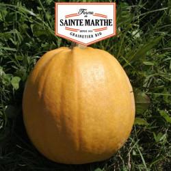 Courge Melonnette Jaspée de Vendée 15 graines - La ferme Sainte Marthe