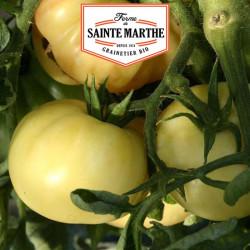 Tomate Beauté Blanche 50 graines - La ferme Sainte Marthe