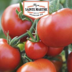 50 graines Tomate Moneymaker - La ferme Sainte Marthe