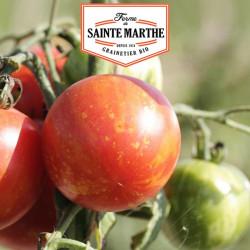 Tomate Tigrella Bicolore 50 graines - La ferme Sainte Marthe
