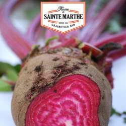Betterave Crapaudine 150 graines - La ferme Sainte Marthe