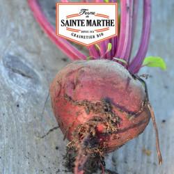 Betterave de Détroit Améliorée 2, 150 graines - La ferme Sainte Marthe