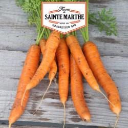 Zanahoria Nantes 2 - 1 500 semillas - La ferme de Sainte Marthe