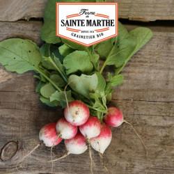 Radis Gaudry 2 - 1 000 graines - La ferme Sainte Marthe