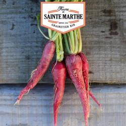 Radis Rose de Paques 3 - 1 000 graines - La ferme Sainte Marthe