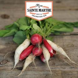 Radis Mix : Flamboyant, Sora, Chandelle de Glace 1000 graines - La ferme Sainte Marthe