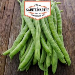Graines Haricot à Rames Neckarkonigin Mangetout 10g - La ferme Sainte Marthe