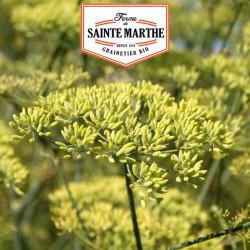 Anis Vert 750 graines - La ferme Sainte Marthe