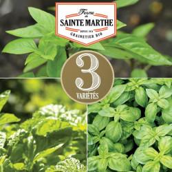 200 graines Basilic en mélange - La ferme Sainte Marthe