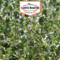 Sarriette 500 graines - La ferme Sainte Marthe