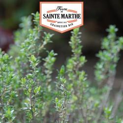 1000 graines Thym Commun - La ferme Sainte Marthe