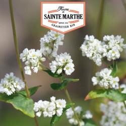 Graines Sarrasin 400g - La ferme Sainte Marthe