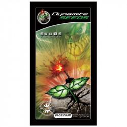 Dynamite Seeds 5g - Stimulateur pour graines - Platinium
